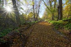 在树中的路在有秋叶的老公园和太阳 免版税库存图片