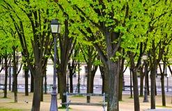 在树中的路灯柱 库存图片
