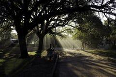 在树中的阳光 免版税库存照片
