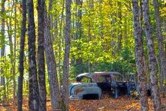在树中的破烂物汽车 库存图片