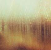 在树中破裂的光的背景图象 图象是减速火箭的被过滤的instagram样式 库存图片
