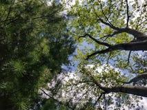 在树之间的夏天天空 免版税图库摄影