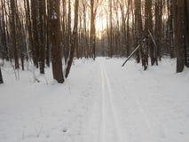 在树之间的滑雪轨道 库存照片