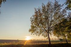 在树之间的秋天日落 库存照片