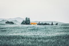 在树之间的美丽的农夫房子 免版税图库摄影