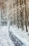 在树之间的走的路在一个多雪的森林里 免版税库存图片