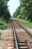 在树之间的铁路轨道 免版税库存图片