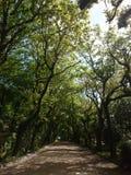 在树之间的土路 免版税库存图片