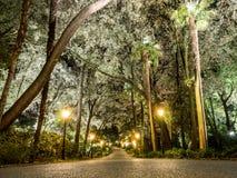 在树之间的夜 免版税库存图片