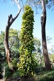 在树之间的大植物 库存照片
