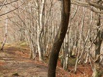 在树之间的山行迹 免版税库存照片