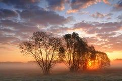 在树之间的日出在一个有薄雾的草甸 免版税库存照片
