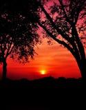 在树之间的日落 免版税库存照片