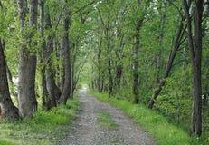 在树之间的森林公路 库存图片