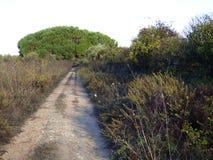 在树之间的泥铺跑道 图库摄影