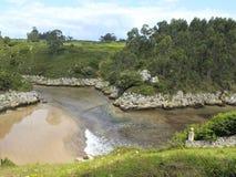 在树之间的自然水池与太阳 免版税库存照片