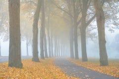 在树之间的薄雾 免版税库存照片