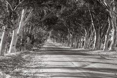 在树之间的路 免版税库存图片