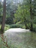 在树之间的水 库存照片