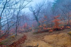 在树倾斜的山在秋天阴云密布和有雾的天 库存图片