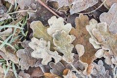 在树冰下的下落的干燥叶子 免版税库存照片