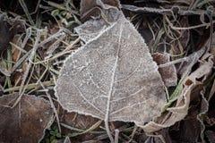 在树冰下的下落的干燥叶子 库存图片
