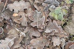 在树冰下的下落的干燥叶子 免版税图库摄影
