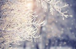 在树冰的分支和雪在冬天 免版税库存照片