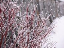 在树冰的分支 免版税图库摄影