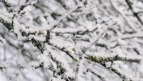 在树冰的树枝 股票录像