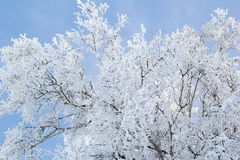 在树冰的树 免版税库存图片