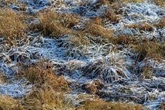 在树冰的秋天草 免版税图库摄影