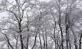 在树冰的结构树 库存照片