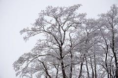 在树冰的结构树 免版税库存图片
