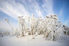 在树冰的草反对天空 图库摄影