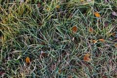 在树冰的草 免版税库存图片
