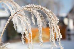 在树冰的草 库存照片