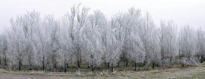 在树冰的结构树 图库摄影