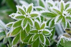 在树冰的绿草 免版税库存图片