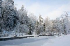 在树冰盖的树 免版税库存照片