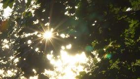 在树分支的太阳  股票视频