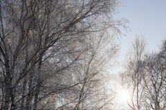 在树分支的树冰  库存照片