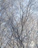 在树分支的霜  免版税库存图片