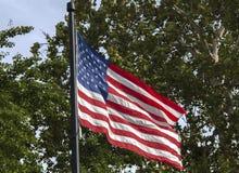 在树前面的美国国旗飞行 图库摄影