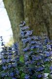 在树前面的紫色开花的植物 免版税库存图片