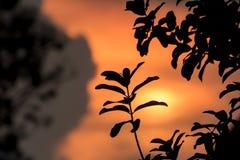 在树剪影的叶子 免版税库存照片