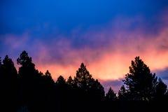 在树剪影的紫色日落 库存照片