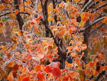 在树叶子的冰 库存照片