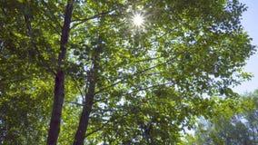 在树叶子的太阳 股票视频