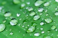 在树叶子的水 免版税库存照片